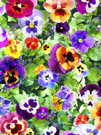 "Hoffman Digital ""Wanderlust"" # Q4435-178-LEAF - Pansies"