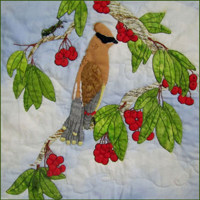 Waxwing Bandit and His Pray Pattern