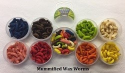 Mummy Worms