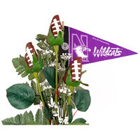 Northwestern Wildcats Gifts and Accessories