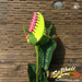 Pink/Yellow Softball Rose - Special Edition Mini-Thumbnail