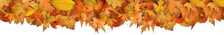 Image result for autumn leaves banner