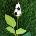 Soccer Rose Vase Arrangement Mini-Thumbnail