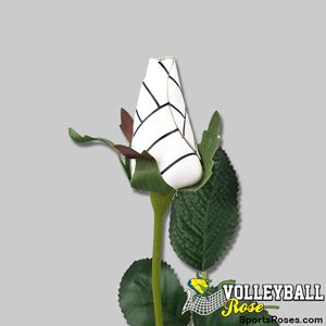 Volleyball Rose