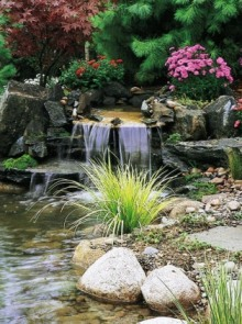 Water Garden & Pond Products