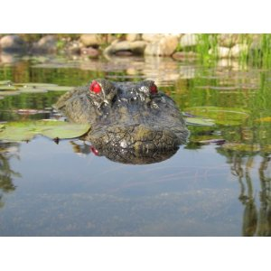 Alligator Decoys