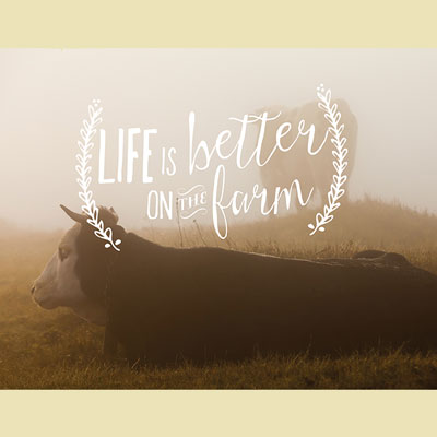 Light Box Insert - Cows - Life is Better on Farm