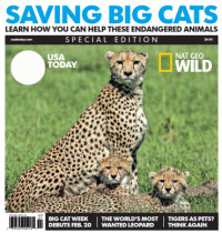 USA TODAY - Nat Geo Wild - Saving Big Cats