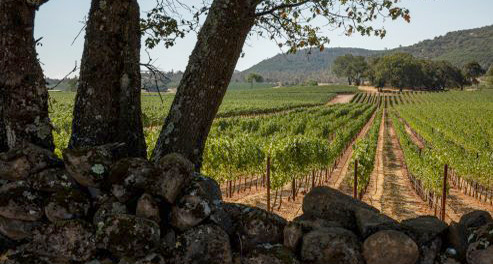 Antica Napa Valley | Single Vineyard Winery Only