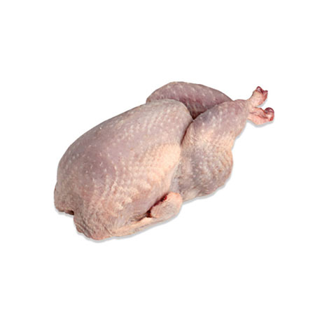 SPANISH QUAIL - in 4-bird packs, 4.6-5.3oz/ea MAIN