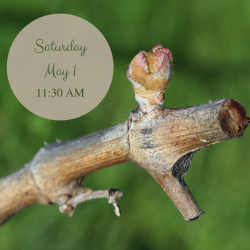 Vineyard-side Experience: May 1st, 11:30 AM THUMBNAIL