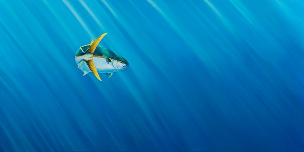 Art Print - Yellowtail