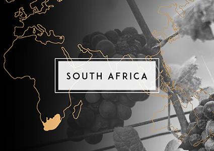 Shop South African Wine | Cape Ardor