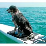 Buddy Pad - Dog SUP Deck Pad THUMBNAIL