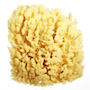 Natural Bath Sponge 3inch Yellow Sea Sponge (polybox) SWATCH