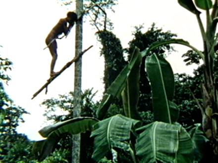 Climbing the Peach Palm_THUMBNAIL