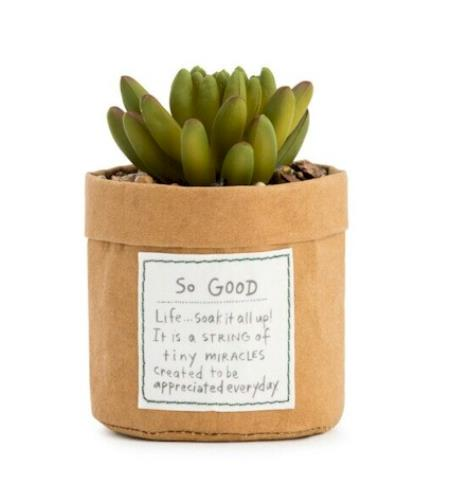 decorative potted succulent MAIN