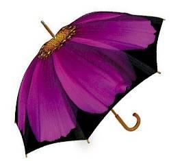 Purple Cosmos Umbrella