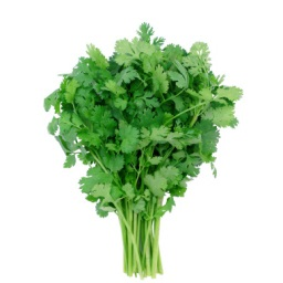 Organic Cilantro Bunch, ea. MAIN