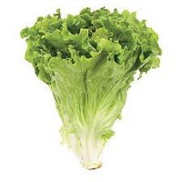 Organic Green Leaf Lettuce, ea. LARGE