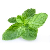 Organic Mint Bunch, ea. THUMBNAIL