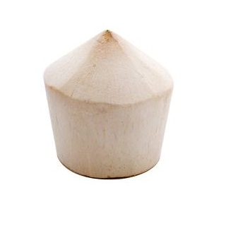 Thai Coconut, ea. LARGE