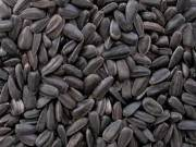 Seed - Bulk Organic Black Sunflower Sprouting Seeds Sprout