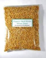 Hard Winter Red Organic Wheat Seeds for Sprouts