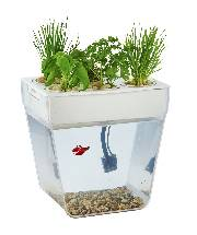 Water Garden Aquaponic AquaFarm Self Cleaning Fish Tank that Grows Food  By  Back to the Roots
