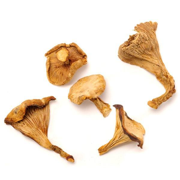DRIED CHANTERELLES 1 LB THUMBNAIL