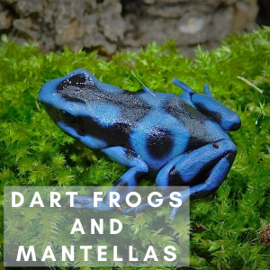 Dart Frogs and Mantellas