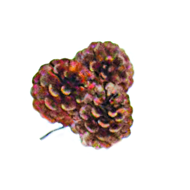 Pine Cone Clusters THUMBNAIL