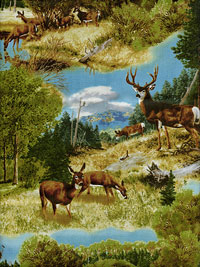 "Quilting Treasures ""Whitetail Ridge"" #1649-24086-G - Deer in the Woods THUMBNAIL"