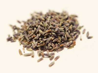 Lavender  — Priced per Ounce MAIN