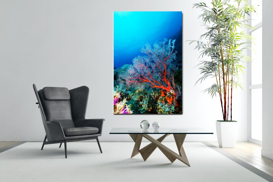 SEA LIFE, UNDERWATER, FISH, TURTLE, DOLPHIN, FROG, SEA, CORAL LARGE