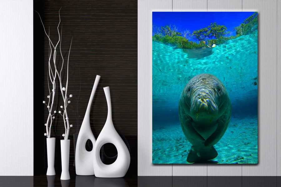 NEW ARRIVAL, PIXODUDE, PIXOTILES, SEA LIFE, TURTLES, SHARKS, UNDERWATER, FISH, OCEAN, SEA, CORAL, DIVING LARGE
