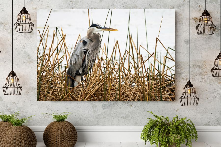 Canvas Art Wall Decor, BIRDS 70040 THUMBNAIL