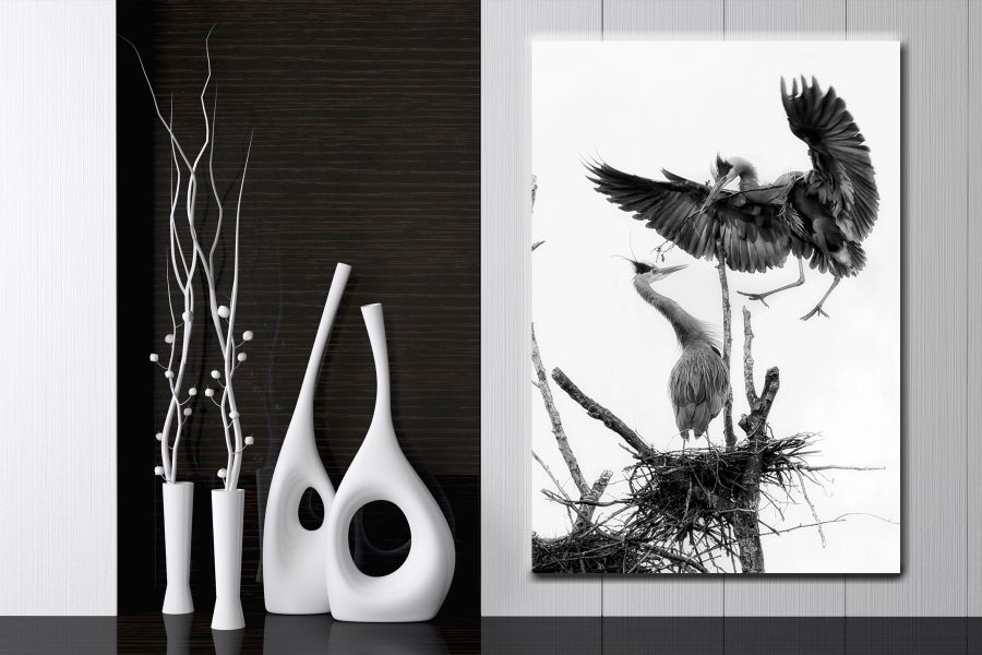 BIRDS, FEATHERS, CRANE, EAGLES, FLYING, THUMBNAIL