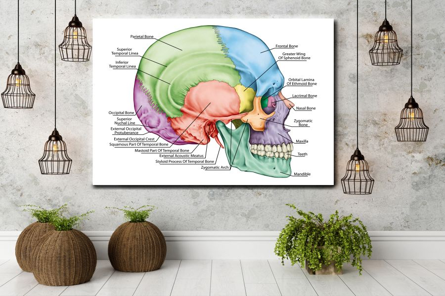 Canvas Art Wall Decor, CANVAS Art EDUCATION & SCIENCE 98006 110 LARGE