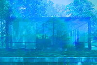 James Welling: Glass House 5905 THUMBNAIL