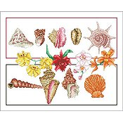 Vickery Collection - Shells and Orchids THUMBNAIL