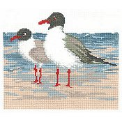 Imaginating - Laughing Gulls 2964 THUMBNAIL