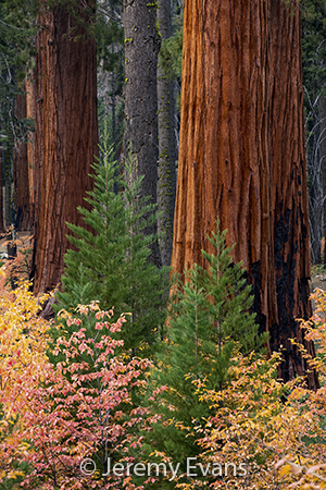 2021 Sierra Club Engagement Calendar