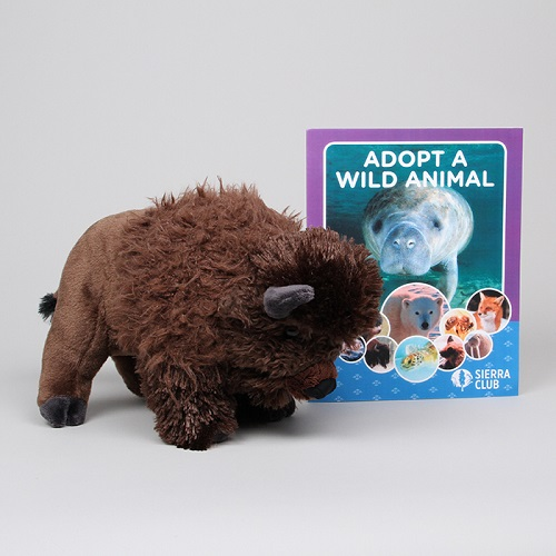 Adopt a Wild Animal Bison_LARGE