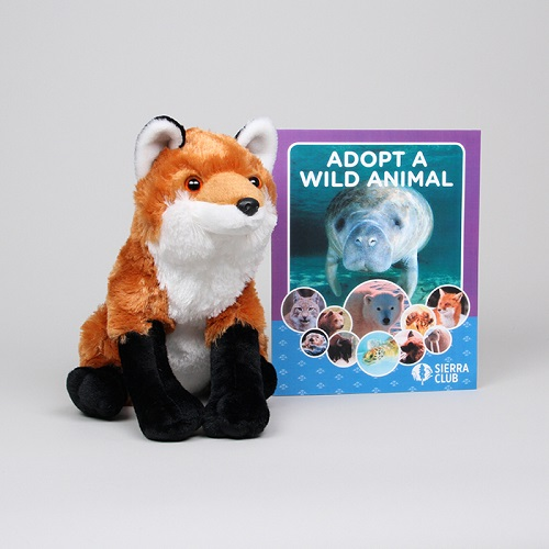 Adopt a Wild Animal Red Fox LARGE