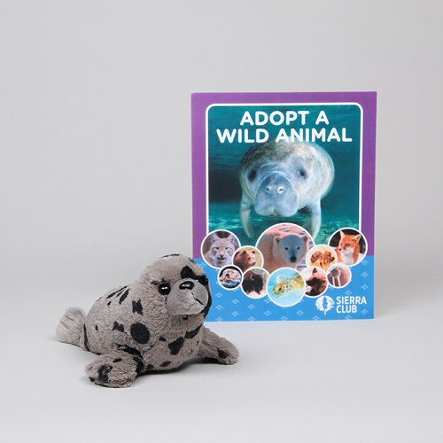 Adopt a Wild Animal Harbor Seal LARGE