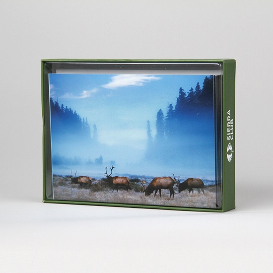 Sierra Club Roosevelt Elk Holiday Cards