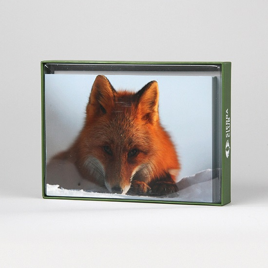 Sierra Club Red Fox Resting on Snow Holiday Cards