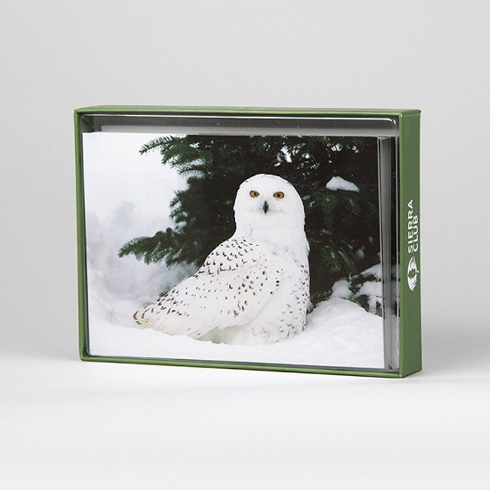 Sierra Club Snowy Owl in Snow Holiday Cards