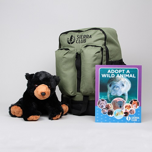 Black Bear Deluxe Set LARGE